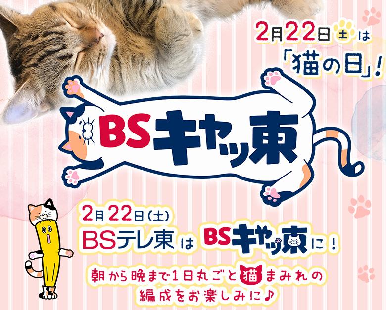 2月22日(土)は「猫の日」!朝から晩まで1日丸ごと猫まみれ!社名も ...